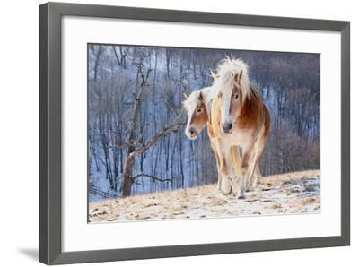 Two Horses on Snowy Hill in Winter-Driftless Studio-Framed Photographic Print