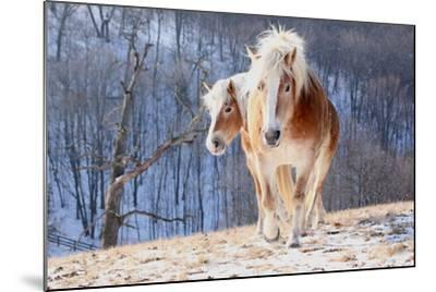 Two Horses on Snowy Hill in Winter-Driftless Studio-Mounted Photographic Print