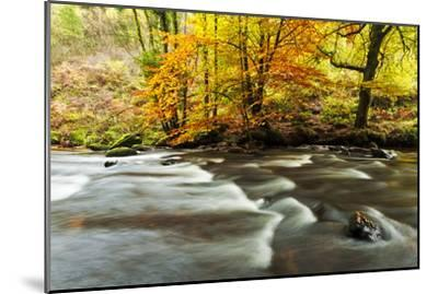The River Teign and Whiddon Wood in Autumn.-Alex Hare-Mounted Photographic Print