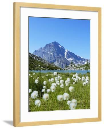Cotton Grass and Monte Leone-Fabio Bianchi Photography-Framed Photographic Print