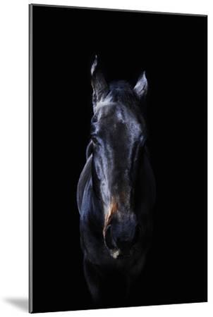 Horse-Yusuke Murata-Mounted Photographic Print