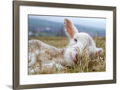 Newborn Lamb-TJ Blackwell-Framed Photographic Print