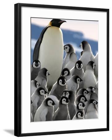 Penguin Creche in Antarctica-David Yarrow Photography-Framed Photographic Print