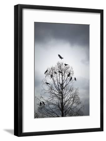 A Tree in Which Many Crows Have Rest-Hiroshi Watanabe-Framed Photographic Print