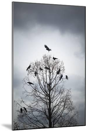 A Tree in Which Many Crows Have Rest-Hiroshi Watanabe-Mounted Photographic Print