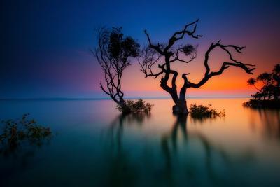 Trees in Bay at Sunset-visionandimagination.com-Framed Photographic Print