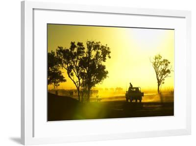 Silhouetted Cattle Muster at Sunset, Armraynald Station.-Johnny Haglund-Framed Photographic Print