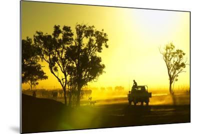 Silhouetted Cattle Muster at Sunset, Armraynald Station.-Johnny Haglund-Mounted Photographic Print