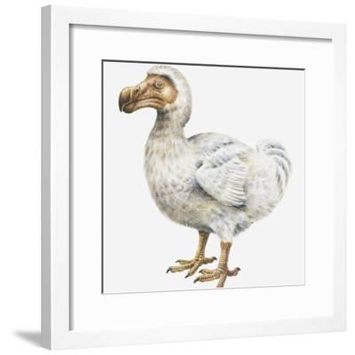 Illustration of a Dodo (Raphus Cucullatus)-Dorling Kindersley-Framed Photographic Print