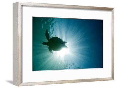 Sea Turtle-M.M. Sweet-Framed Photographic Print