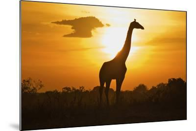 Silhouette Giraffe at Sunset-Joost Notten-Mounted Photographic Print