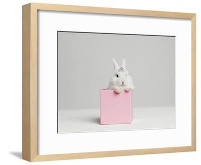 White Bunny Rabbit Wearing Tiara Sitting in Pink Box, Studio Shot-Roger Wright-Framed Photographic Print