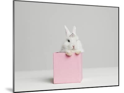 White Bunny Rabbit Wearing Tiara Sitting in Pink Box, Studio Shot-Roger Wright-Mounted Photographic Print