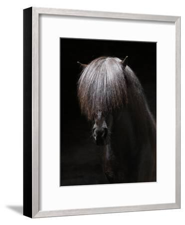 Portrait of Stallion-Arctic-Images-Framed Photographic Print