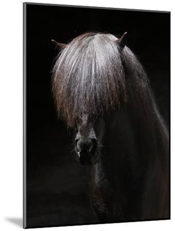Portrait of Stallion-Arctic-Images-Mounted Photographic Print