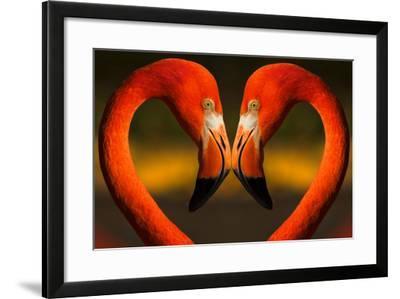 Flamingos with Heart Shaped Necks-VAILLANCOURT PHOTOGRAPHY-Framed Photographic Print
