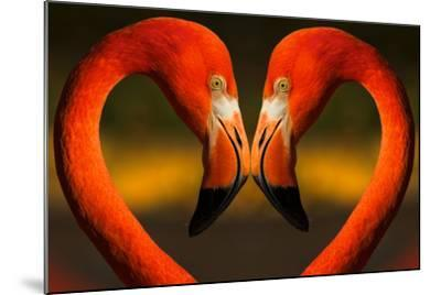 Flamingos with Heart Shaped Necks-VAILLANCOURT PHOTOGRAPHY-Mounted Photographic Print