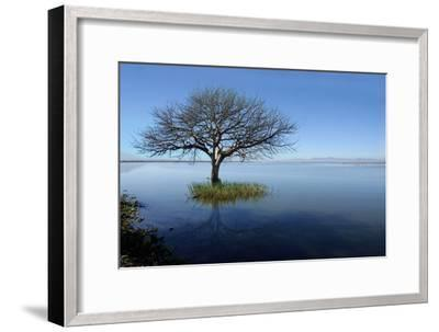 Lonely Tree-saul landell / mex-Framed Photographic Print