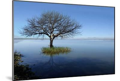 Lonely Tree-saul landell / mex-Mounted Photographic Print