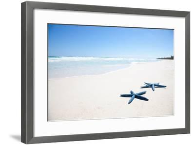 Two Blue Starfish on Tropical Beach-Lulu-Framed Photographic Print