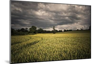 Every Now and Then, the Sun Comes out to Produce D-A photo by Fletche-Mounted Photographic Print