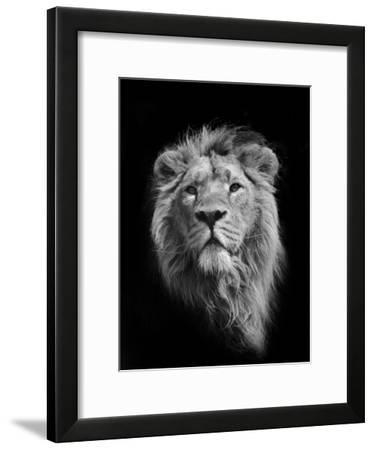 The King (Asiatic Lion)-Stephen Bridson Photography-Framed Photographic Print