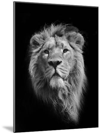 The King (Asiatic Lion)-Stephen Bridson Photography-Mounted Photographic Print