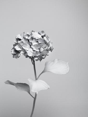 White Nature-Henrik Sorensen-Framed Photographic Print