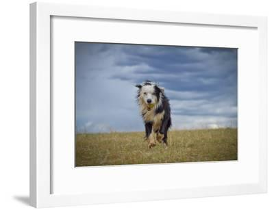 Lord of Storm-Anda Stavri Photography-Framed Photographic Print