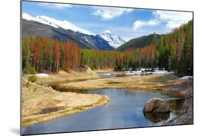 Winding Colorado River with Mountains and Pines-Terry Kruse-Mounted Photographic Print