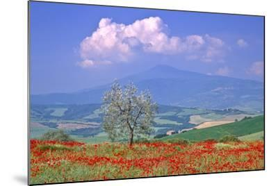 Val D'orcia Tuscany Itlay-Kathy Collins-Mounted Photographic Print