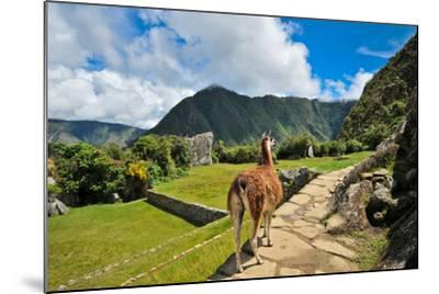 Lama at Machu Picchu-Jose Antonio Maciel-Mounted Photographic Print