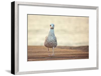 Seagull-by Juanedc-Framed Photographic Print