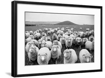 Sheep's Eyes-Raymond Kleboe-Framed Photographic Print