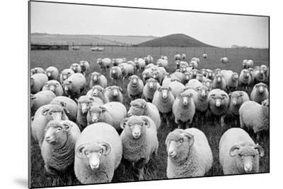 Sheep's Eyes-Raymond Kleboe-Mounted Photographic Print
