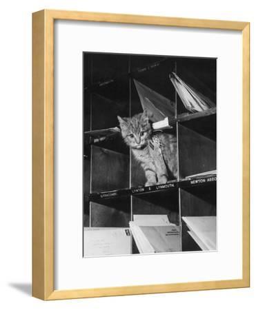 Pussy Cat Post-Keystone-Framed Photographic Print