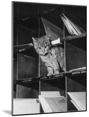 Pussy Cat Post-Keystone-Mounted Photographic Print