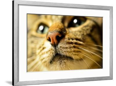 Tiger Cat Nose-Volanthevist-Framed Photographic Print
