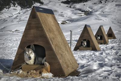 Huskies Resting Herd-JaviRuiz-Framed Photographic Print