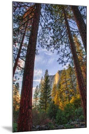 North View Through The Trees, Firefall, Horsetail Falls, Yosemite National Park-Vincent James-Mounted Photographic Print