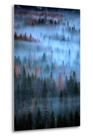 Mesmerizing Fog and Trees, Yosemite Valley, National Parks, California-Vincent James-Metal Print
