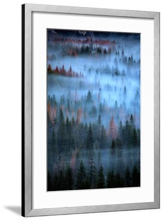 Mesmerizing Fog and Trees, Yosemite Valley, National Parks, California-Vincent James-Framed Photographic Print