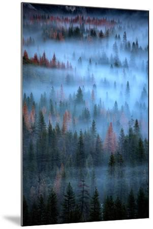 Mesmerizing Fog and Trees, Yosemite Valley, National Parks, California-Vincent James-Mounted Photographic Print