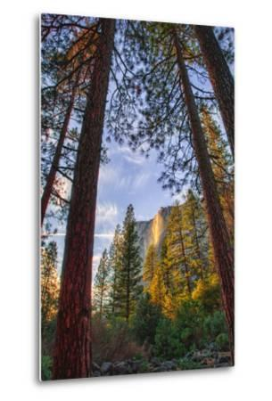 North View Through The Trees, Firefall, Horsetail Falls, Yosemite National Park-Vincent James-Metal Print