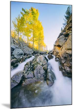 Autumn Flow at Bishop Canyon Creek, Eastern Sierras California-Vincent James-Mounted Photographic Print