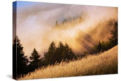 Collision of Light and Fog, Sunset from Mount Tamalpais, San Francisco-Vincent James-Stretched Canvas Print