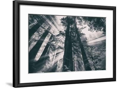 Energy, Redwoods and Morning Light, California Coast-Vincent James-Framed Photographic Print