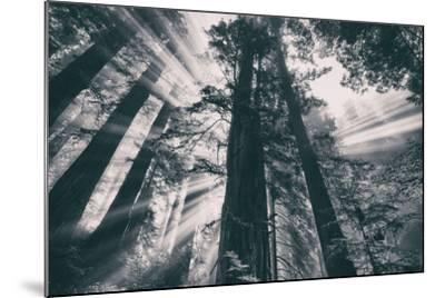 Energy, Redwoods and Morning Light, California Coast-Vincent James-Mounted Photographic Print