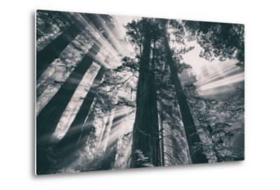 Energy, Redwoods and Morning Light, California Coast-Vincent James-Metal Print