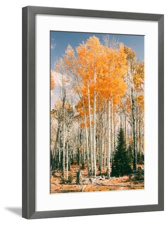 Autumn Sun Trees at Dixie National Forest, Southern Utah, Southwest-Vincent James-Framed Photographic Print